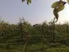 Appelplantage