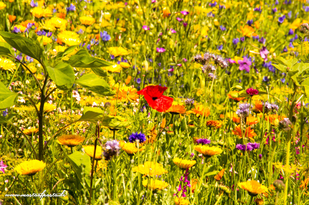 farbrausch-sommerwiese