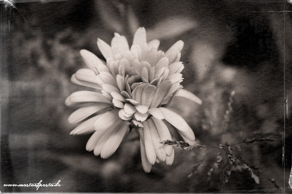 flower-bw-contest